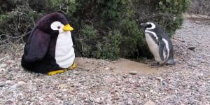 Pingu-und-Magellanpinguin