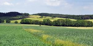 Landschaft in Luxemburg