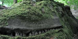 Könnte ein Krokodil sein