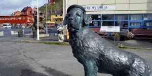 Hund von Honningsvåg