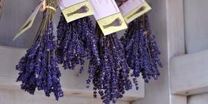 Lavendel-Stand