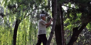Tai Chi im Ritan Park