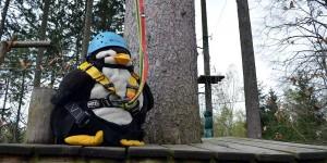 Pingu im Kletterwald
