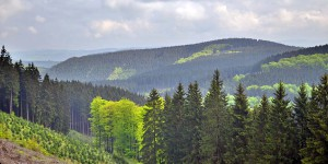 Grüne Wälder im Sauerland