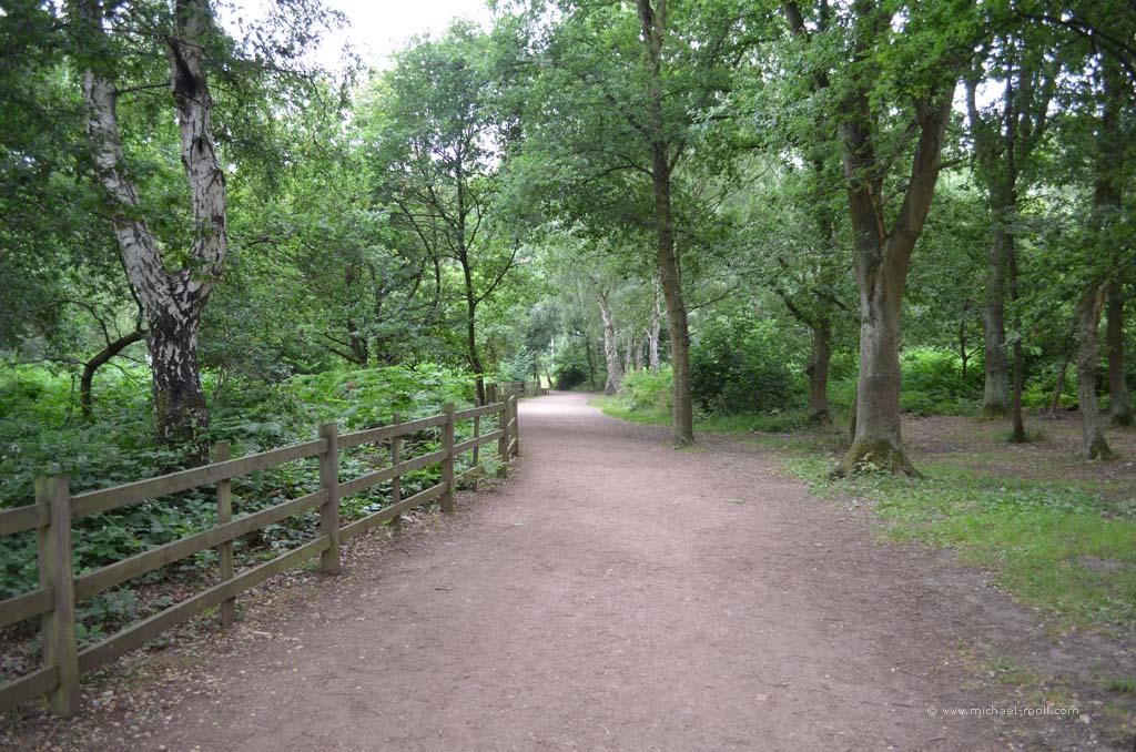 Major Oak im Sherwood Forest