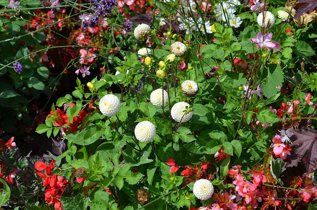 Pflanzen in London