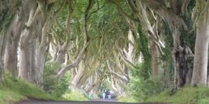 Straße unter Buchen in Nordirland