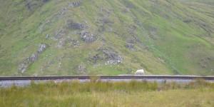 Schaf auf dem Gleis