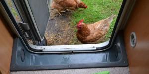 Hühner im Wohnmobil
