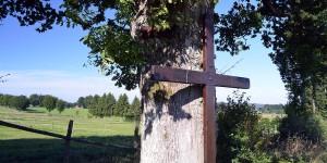Naturdenkmal Theissbaum