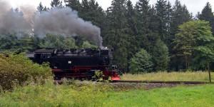 Der Zug kommt aus dem Wald