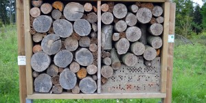 Insektenhotel fast nur aus Baumstämmen