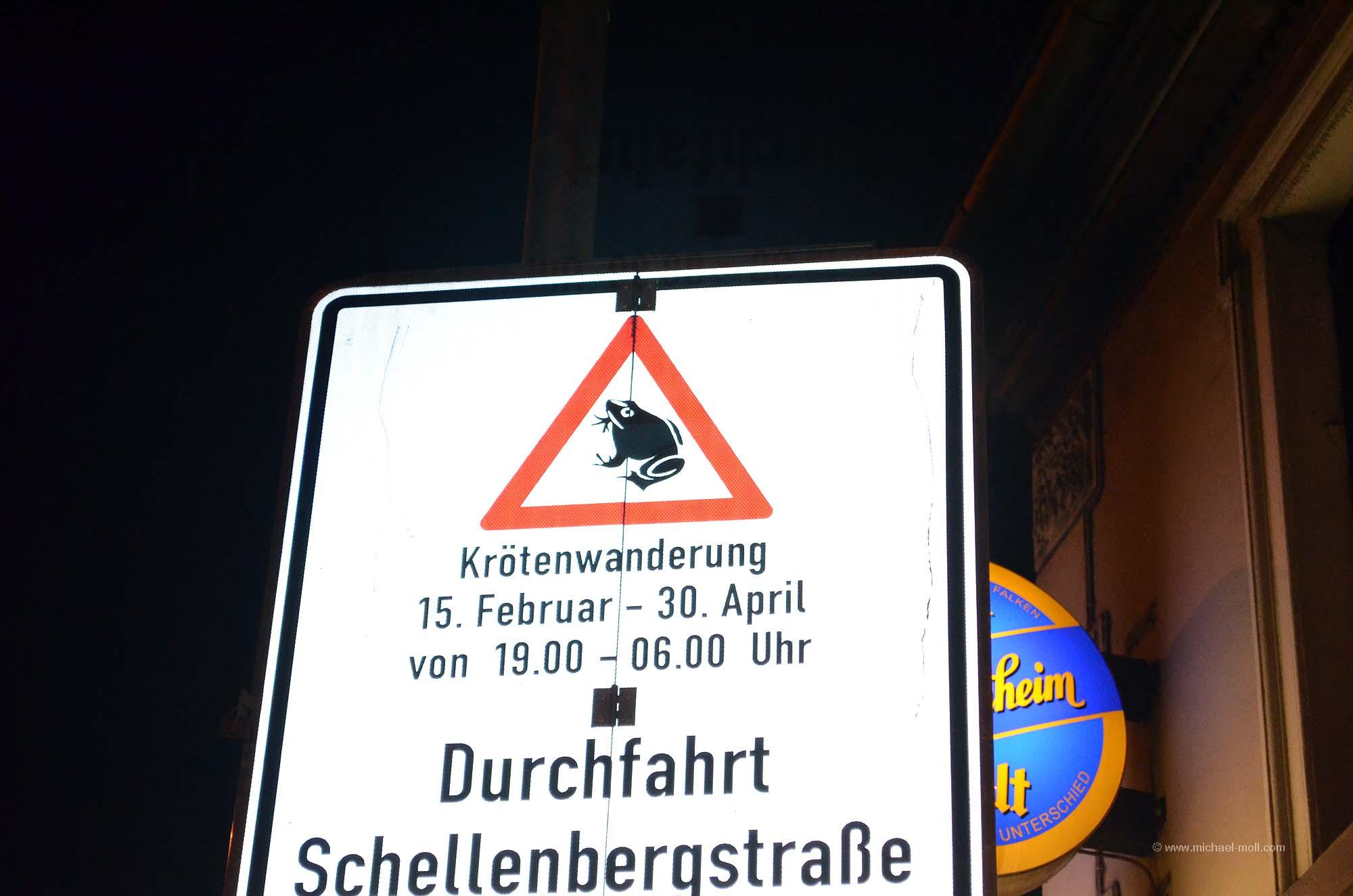 Krötenwanderung in Essen