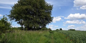 Landschaft in Dortmund-Barop