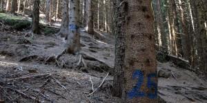 Nummerierung der Serpentinen