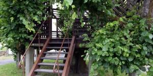 Tanzlinde in Sachsenbrunn