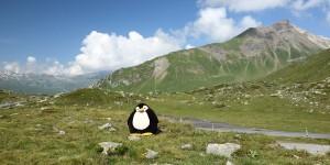 Pingu war auch auf dem Pass
