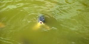 Fisch im Teich