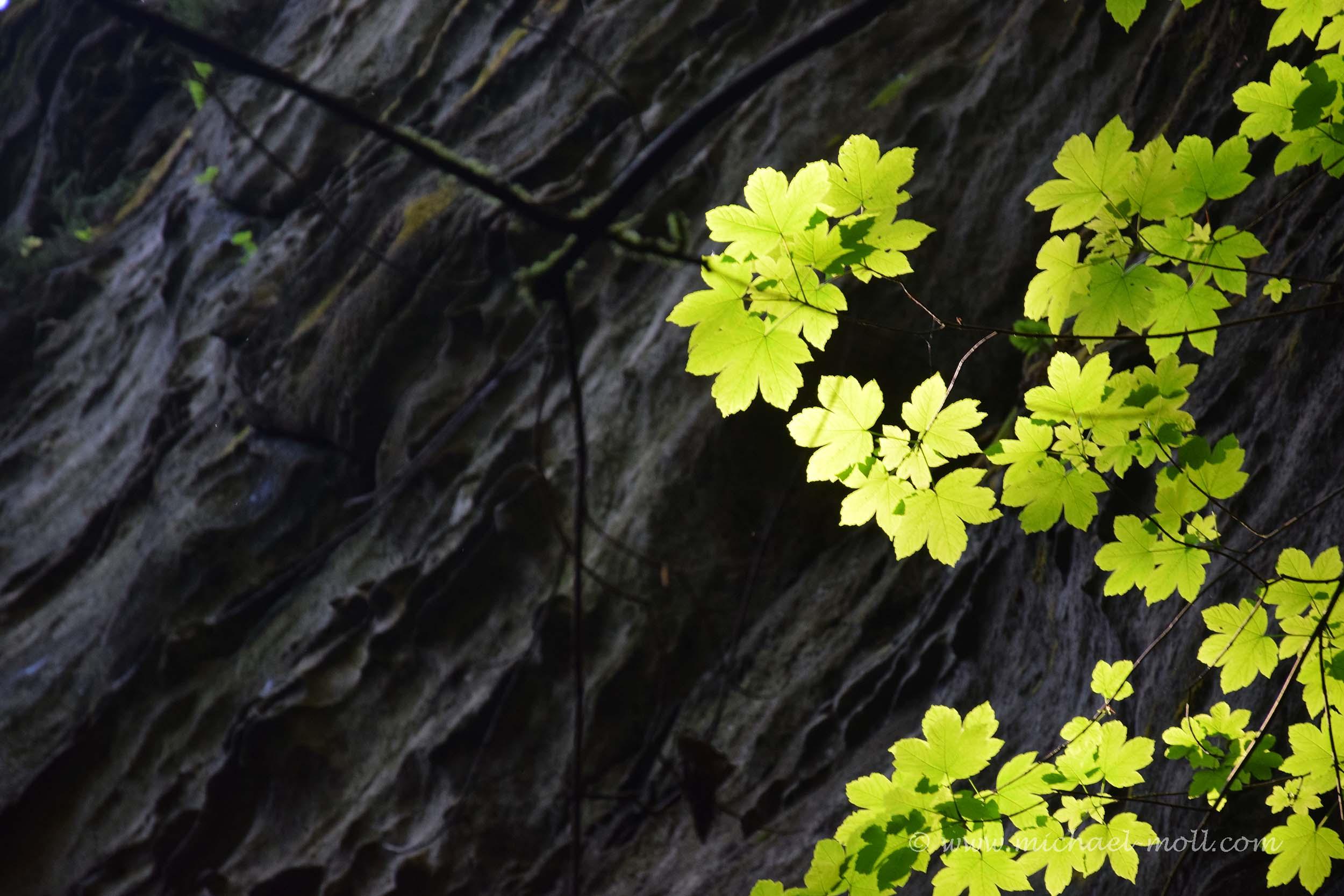 Leuchtende Pflanzen
