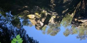 Spiegelung in der Kirnitzsch
