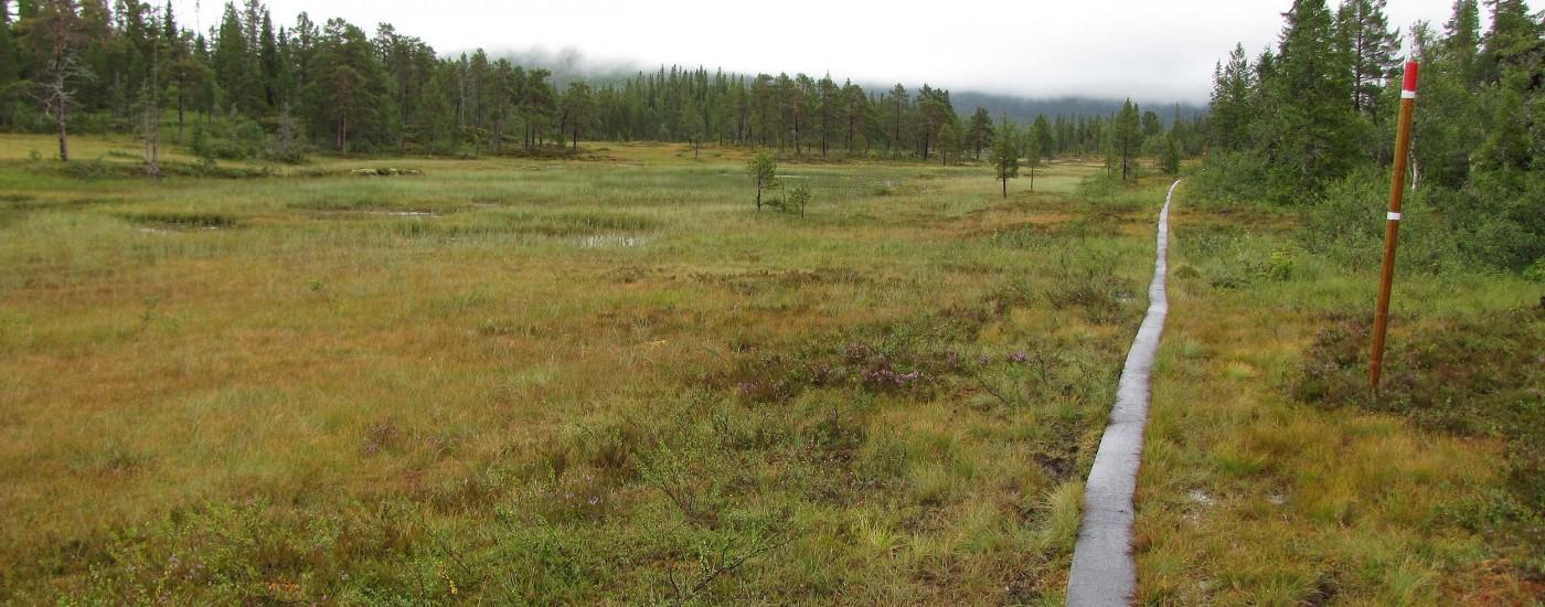 10 Kilometer Holzsteg