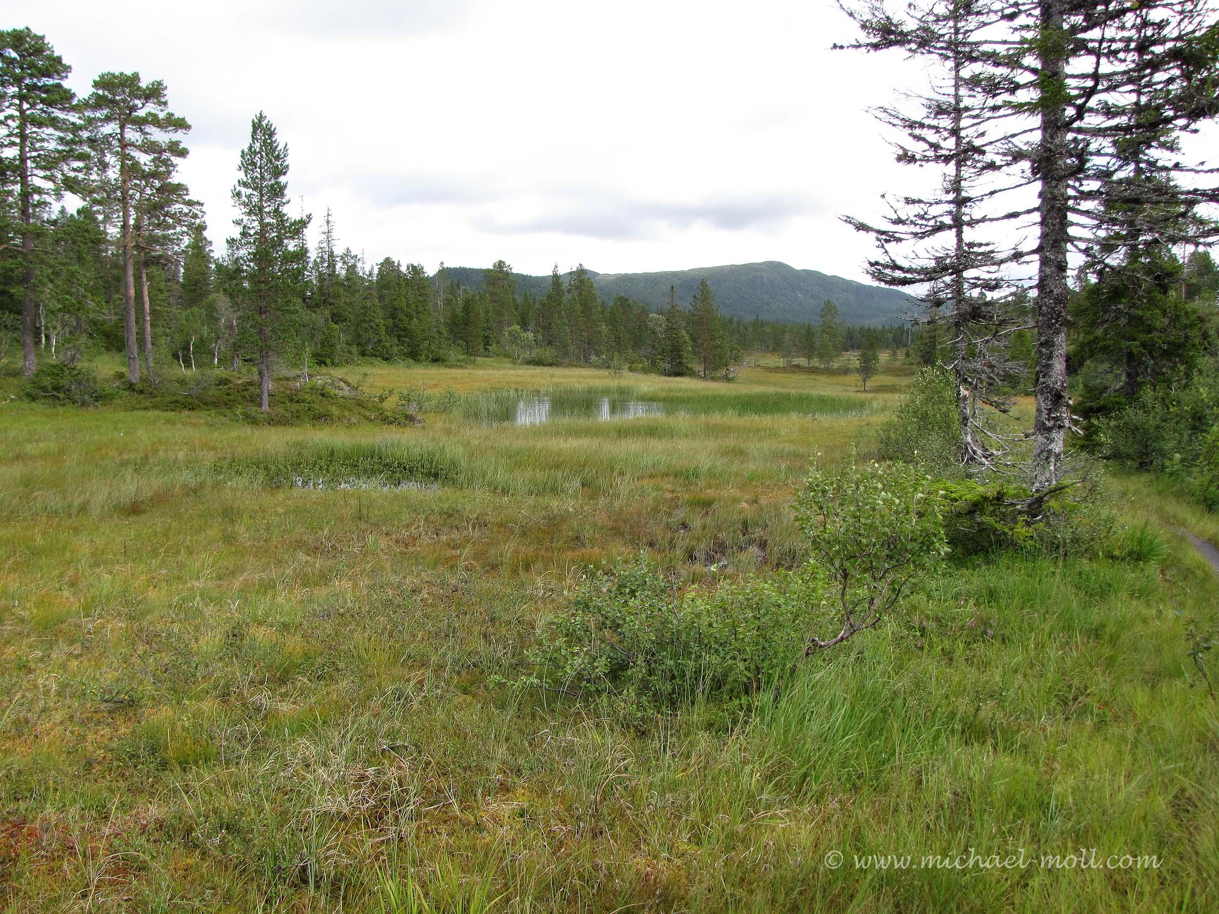 Moorlandschaft in Norwegens Zentrum