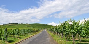 Wanderweg durch die Weinberge