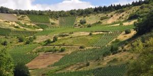 Wein im Dhronbachtal