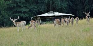 Wildgehege im Dhronbachtal
