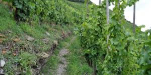 Wandern im Ritsch-Klettersteig