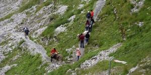 Asiaten mit Kühen auf dem Wanderweg