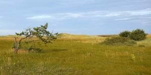 Landschaft auf Holy Island