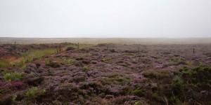 Moorlandschaft im Nationalpark