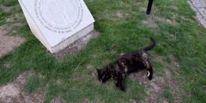 Unsere Canterbury Katze