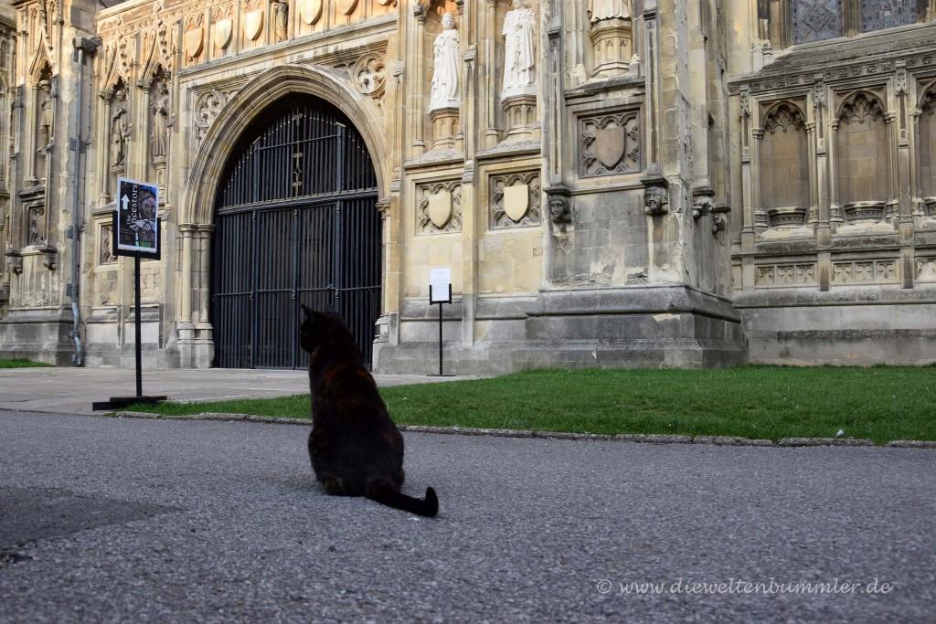 Katze vor der Kathedrale
