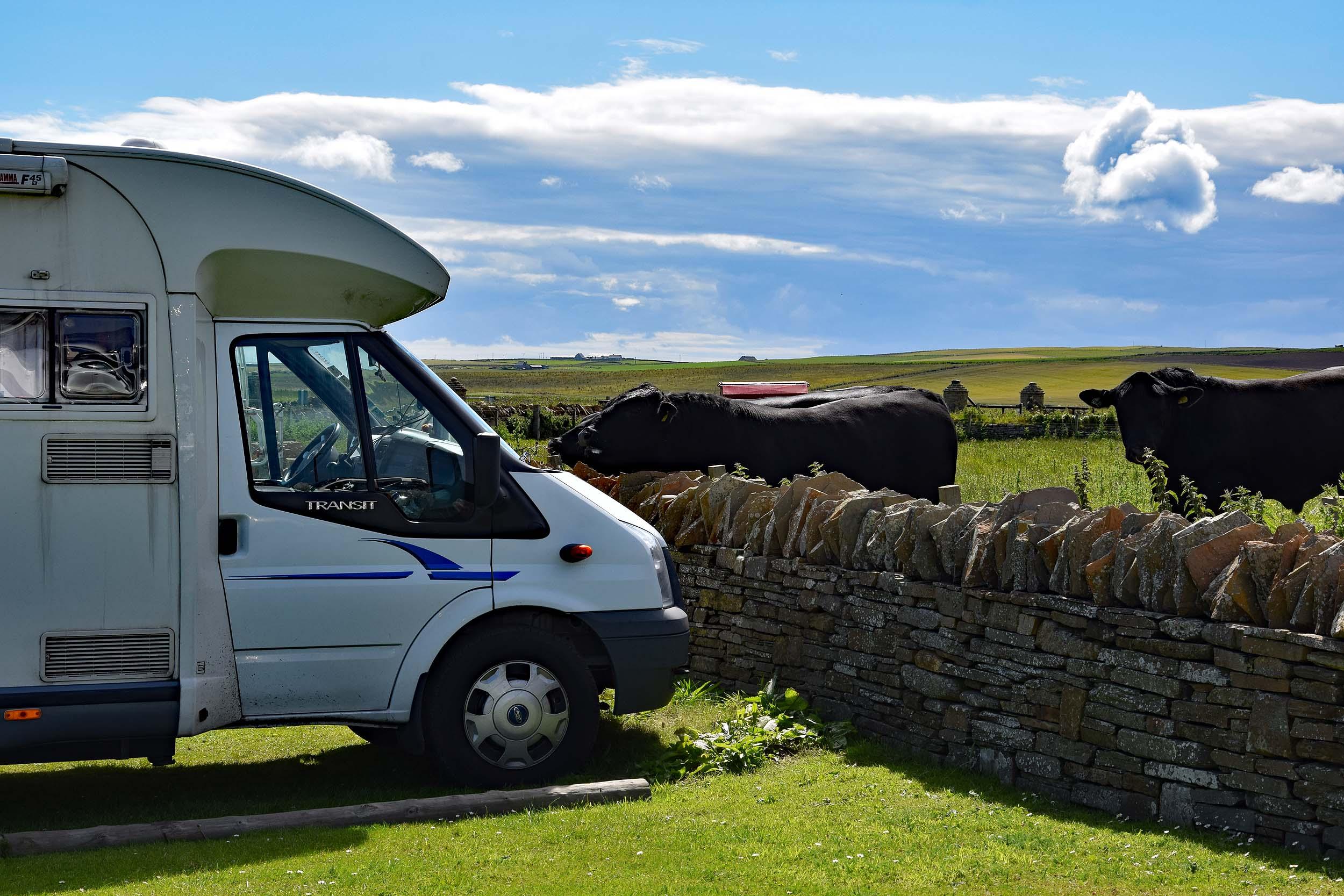 Wohnmobil mit Stieren