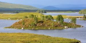Seen und Inseln im Rannoch Moor