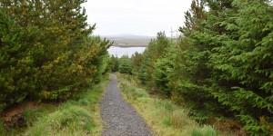 Wanderweg im Langass Woodland