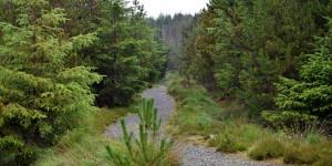 Das Langass Woodland ähnelt dem Harz