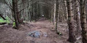 Wald auf Uist