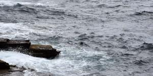 Ein Seehund schaut aus dem Wasser