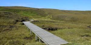 Wanderweg im Hermaness Naturreservat