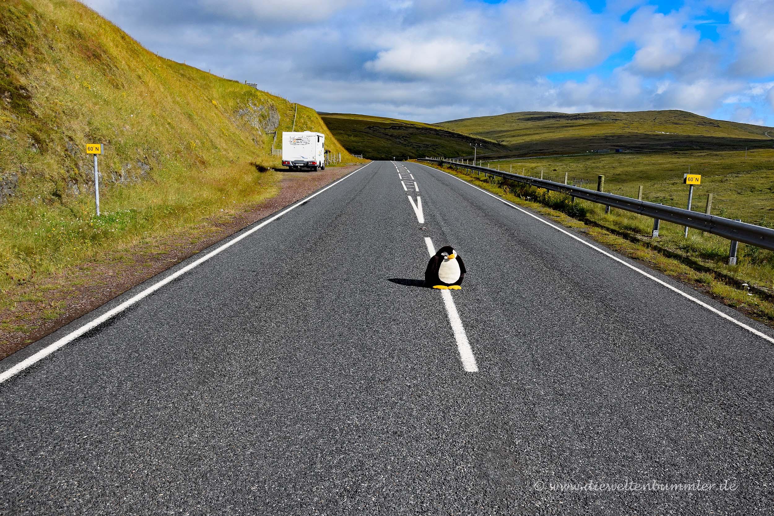 Pingu überquerte auch den 60. Breitengrad