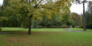 Bäume im Gräflichen Park