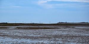 Im Hintergrund ist Farne Island