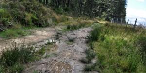 Matschiger Weg