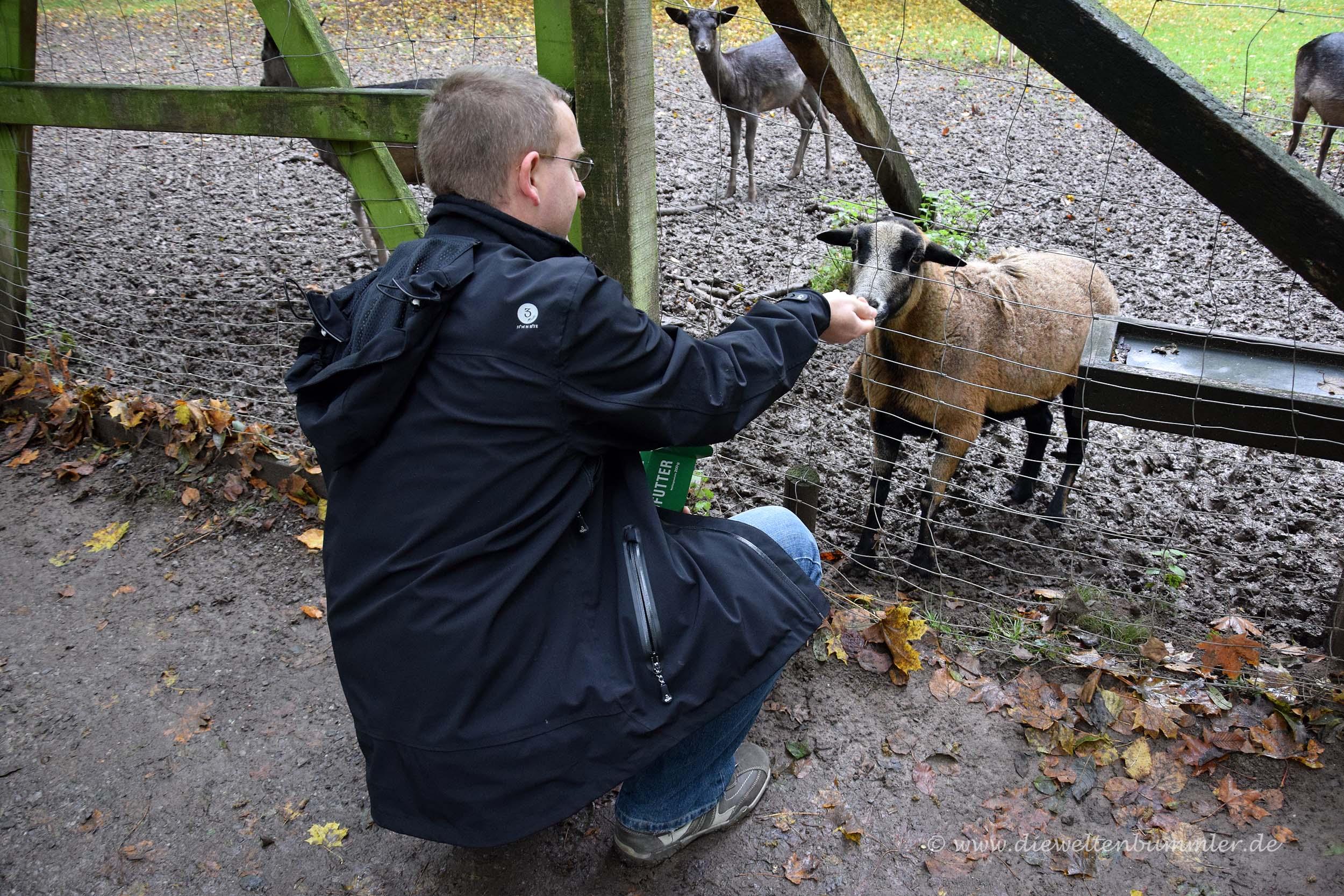 Michael Moll mit Schaf