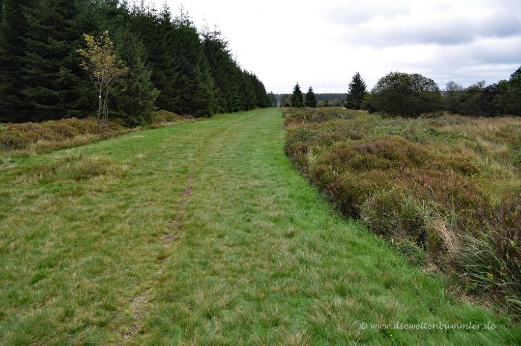 Sehr breiter Grasweg