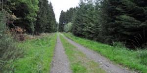 Zwischendurch auf Forstwegen