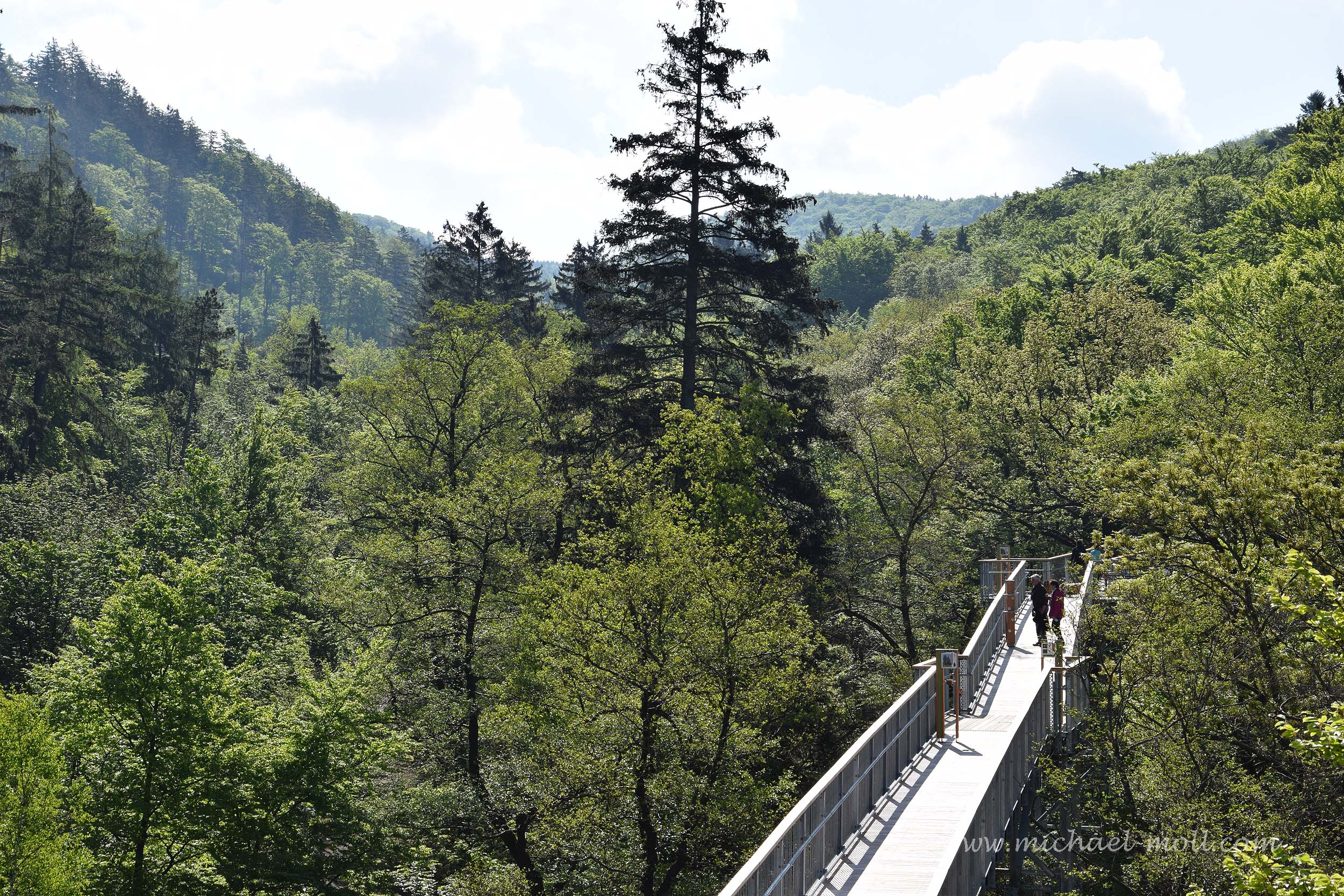 Ausblick auf den Wald